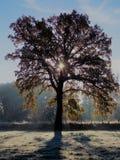 Tree in the morning light