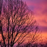 Tree in the morning light. Silhouette of a tree against the colourful morning sky Stock Photos