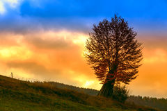 Tree in morning Stock Photography
