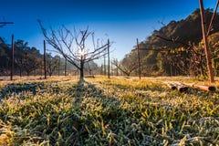 Tree in the morning of winter season Royalty Free Stock Photos