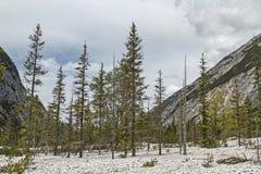 Tree mortality Stock Photography