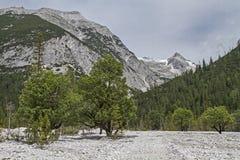 Tree mortality Royalty Free Stock Photography