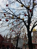 Tree at Moscow Red Square, Russia Royalty Free Stock Photos
