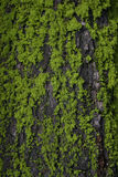 Tree Moss and Bark Stock Photo