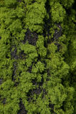 Tree Moss and Bark Royalty Free Stock Photography