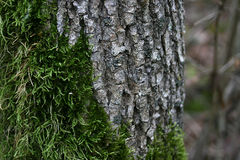 Tree Moss and Bark Stock Photography