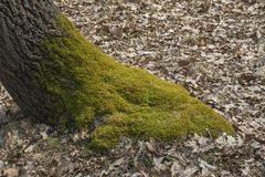 Tree moss bed Royalty Free Stock Images