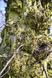 Tree moss close up. Extreme close up of tree moss Stock Image