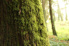 Tree with Moss Stock Photo