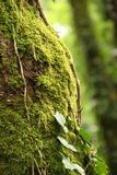 Tree with Moss Stock Photos