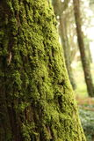 Tree with Moss Royalty Free Stock Images