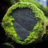 Tree moss royalty free stock image