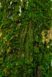 Tree moss Stock Photos
