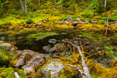 Tree in mossy pond Stock Photos