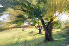 Tree in motion. Camera zooming motion on a tree Stock Images