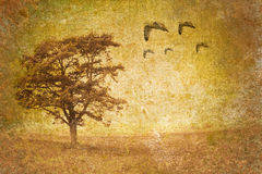 Tree motive on old vintage background Royalty Free Stock Image