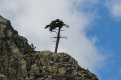 A tree on the mounatin top. Royalty Free Stock Image
