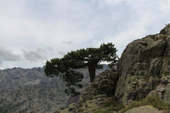 A tree on the mounatin top. royalty free stock photo