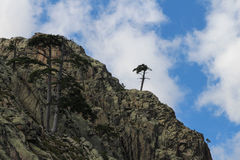 A tree on the mounatin top. Stock Image