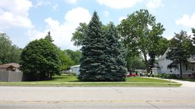Tree in Mount Prospect Stock Photography