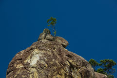 Tree on the mountain. Royalty Free Stock Photo
