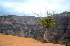 Tree on mountain cliff Royalty Free Stock Image