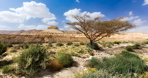 Tree and mountain in desert. Royalty Free Stock Photo