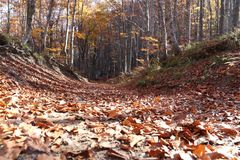 Tree. In mountain, forest in autumn Stock Images