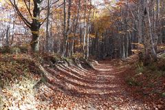Tree. In mountain, forest in autumn Stock Photography