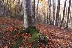 Tree. In mountain, forest in autumn Royalty Free Stock Photography