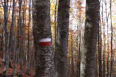 Tree. In mountain, forest in autumn Stock Photo