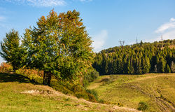 Tree on a mountain grassy hill side. Meadow on a clear autumn sunny day with blue sky. powerlines along the hillside Stock Photography
