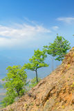 Tree on mountain horizon Royalty Free Stock Image