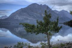 Tree and mountain lake Stock Photo
