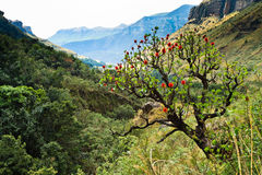 Tree in a mountain landscape Royalty Free Stock Image