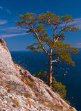 Tree on the mountain Stock Photography