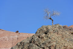 Tree on a mountain in the Ounila Valley. Royalty Free Stock Photo