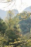 Tree on mountain royalty free stock photo