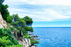 Tree on the mountain. The rocky coastline. Tree on the mountain Stock Images