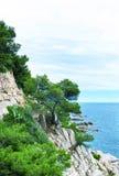Tree on the mountain. The rocky coastline. Tree on the mountain Stock Photos