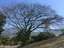 Tree, mountain and sky. Landscape with tree without leaves, mountain and blue sky Royalty Free Stock Photo