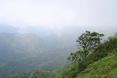 Tree on a mountain slope Royalty Free Stock Photos