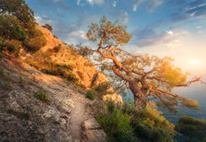 Tree on the mountain at sunrise. Colorful landscape Royalty Free Stock Photography