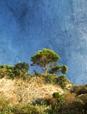 Tree on a Mountain Top Stock Image