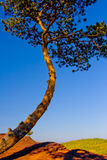 Tree at mountain top Royalty Free Stock Photo