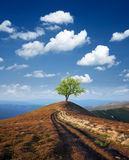 Tree on a mountain top Royalty Free Stock Photo
