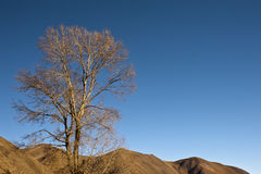 Tree at mountain top. One tree and mountain background Royalty Free Stock Photography