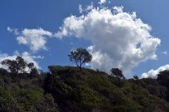 Tree on a mountain royalty free stock photos