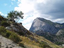 Tree on the mountain Stock Photo