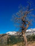 Tree. Mountain winter hiver arbre automne algerie tikjda nature Royalty Free Stock Photo